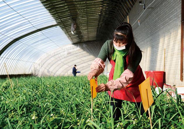 滦平县加大农业品牌建设力度